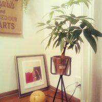 設置場所別!お洒落な観葉植物5選の画像