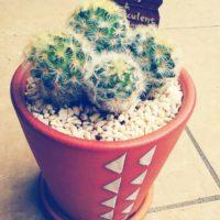 プレゼントにおすすめな観葉植物をご紹介します!の画像