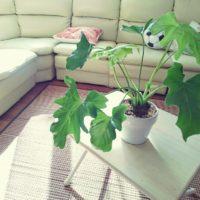 お店の人が教えたくない『育てやすくて長く楽しめる観葉植物』の画像