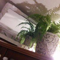 間接照明で観葉植物をおしゃれに見せる方法!の画像