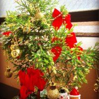 クリスマスツリーに変身!観葉植物のまとめの画像
