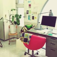 オフィスの置き場所別、おすすめ観葉植物の画像