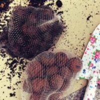 観葉植物にも欠かせない鉢底石、その役割とはの画像