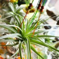 巷で話題のミニ観葉植物。通販サイトで人気の理由とは!?の画像