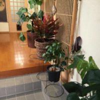 どこに置けばいいの!?大きな観葉植物の人気の置き場所!の画像