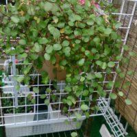 屋外でも楽しめる観葉植物をご紹介!の画像