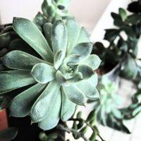 デスクに観葉植物を置いて、リフレッシュをの画像