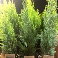 屋外での生育におすすめの観葉植物3選の画像