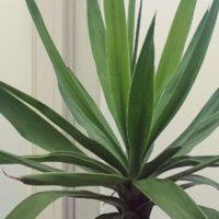 簡単に育てることのできる観葉植物4選の画像