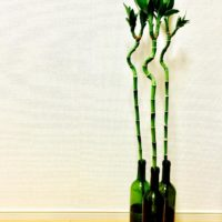 育てて楽しい、鑑賞して楽しい観賞用植物3選の画像