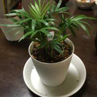 かわいい卓上サイズの観葉植物の画像