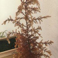 大きい観葉植物の処分方法とは?の画像