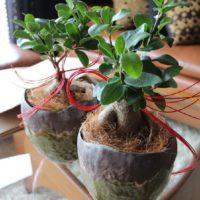 ギフトに最適な観葉植物ってどんなもの?貰って嬉しい観葉植物の画像