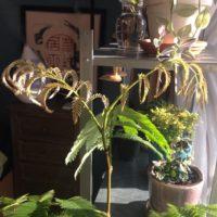 観葉植物の値段、相場はおいくら?の画像