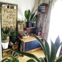 光触媒の人工観葉植物についてご紹介!の画像