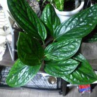 観賞植物を選ぶならこれ!おすすめの観賞植物の画像