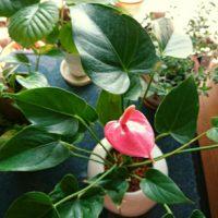 変わった形の珍しい観葉植物の画像