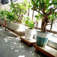 ベランダで楽しむ観葉植物の画像