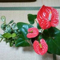 部屋をオシャレにできる人気の床置き観葉植物4選の画像