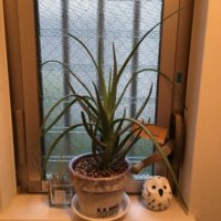 空気を清浄してくれる!? 環境に優しい観葉植物3選の画像