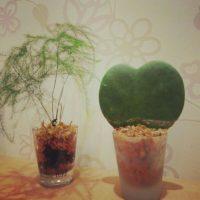 部屋の中では気になります。土を使わず育てる観葉植物の画像