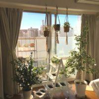 観葉植物を吊るす飾り方、ハンギングプランターとは?の画像