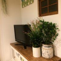 観葉植物の種類を知ろう!の画像