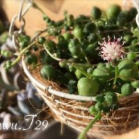 一つあればお洒落なインテリアになる観葉植物3選の画像