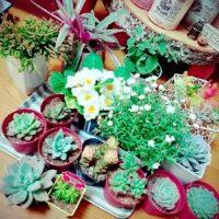 変わった名前の観葉植物3選!の画像