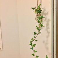 初心者も安心!育てやすい観葉植物3選の画像
