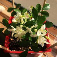インテリアにおすすめ!人気の観葉植物3選の画像