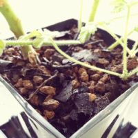 植物は土が大事!観葉植物に欠かせない土3選!の画像