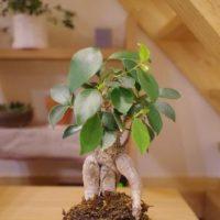 観葉植物を置いてお部屋をおしゃれに変身させましょう!の画像