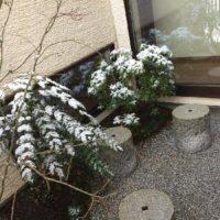 和の雰囲気が凝縮された空間、坪庭!の画像