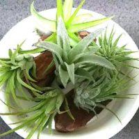 通販で失敗しない観葉植物の買い方の画像