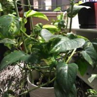 ベランダで植物を育ててみようの画像