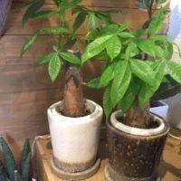 観葉植物をセットで購入できる通販サイトをご紹介!の画像