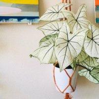 観葉植物を吊るす方法は?ハンギング方法とおすすめ植物10選の画像