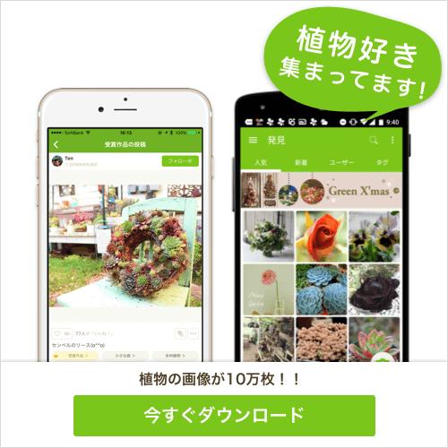 GreenSnapは植物好きの為のアプリです