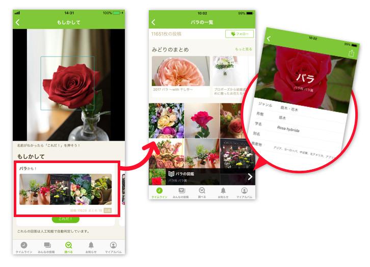 画像の一覧と植物図鑑