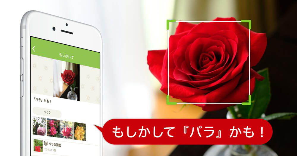 花 の 名前 が わかる アプリ