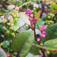 グリーンカーテンにできる植物をご紹介!の画像