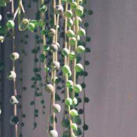 小さくてかわいい多肉植物をご紹介!の画像