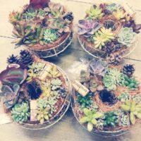 寄せ植えOKな多肉植物でリース作り!の画像