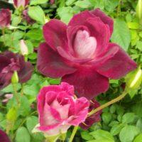 花の種類を検索してみよう!の画像