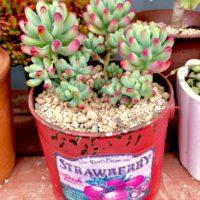 多肉植物にも使われる鉢のサイズ特集!の画像