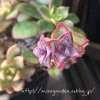 植物を育てる!初心者さんにオススメの多肉植物3選の画像