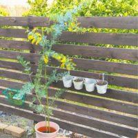 ミモザアカシアの魅力をUP!DIYでもっと可愛い庭造り!の画像