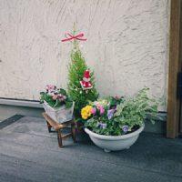 ゴールドクレスト・ウィルマの肥料のやり方をご紹介!の画像