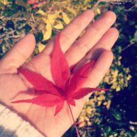 秋の風物詩のモミジをフェンス越しで育てよう!の画像